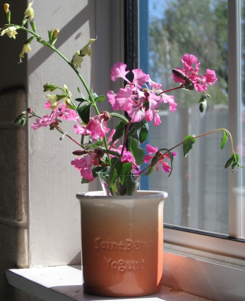 Cut stems of Clarkia unguiculata and Salvia greggii, in bloom, in a cylindrical ceramic vase in a window-sill
